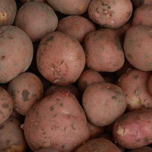 bildstar aardappelen